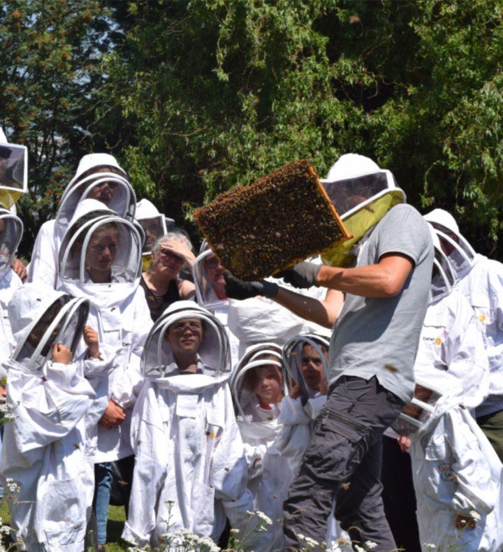 Ouverture pédagogique de ruches