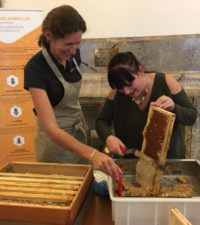 Atelier récolte du miel