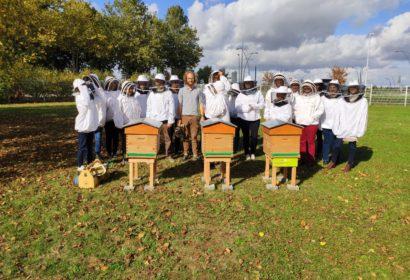 Medisis Beauvais : Sensibilisation au monde des abeilles