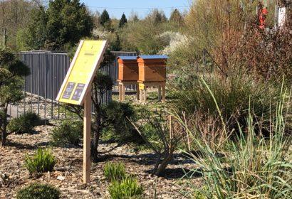 Les abeilles débarquent au centre commercial Grand Quartier de Rennes